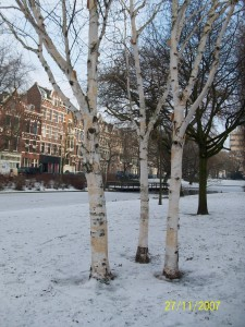 Provenierssingel Winter