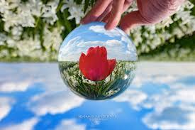 bloembollenplan_tulip